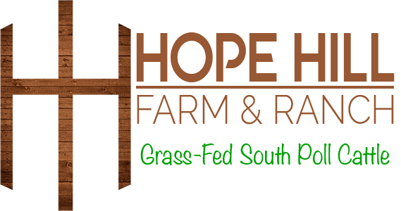 Hope Hill Farm and Ranch | Grass-Fed South Poll Cattle & Horse Boarding